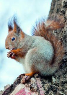 Postcard Squirrel